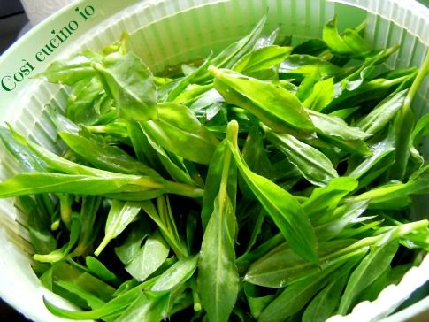 Risotto di carletti, ricetta con erbe spontanee