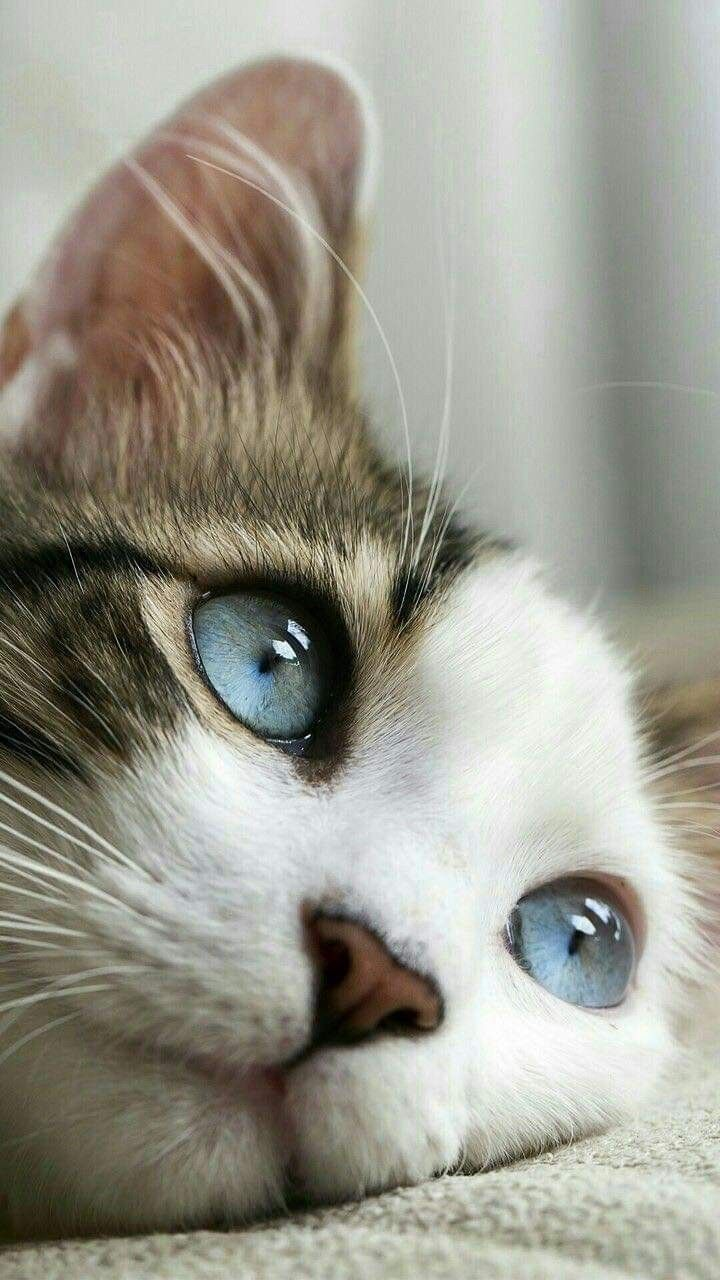 Pretty Cats Image By D Musketeers On Cats In 2020 Cute Animals Beautiful Cats
