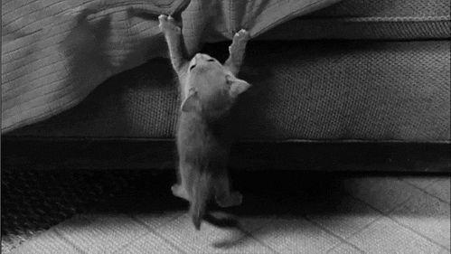 gatos en problemas 14