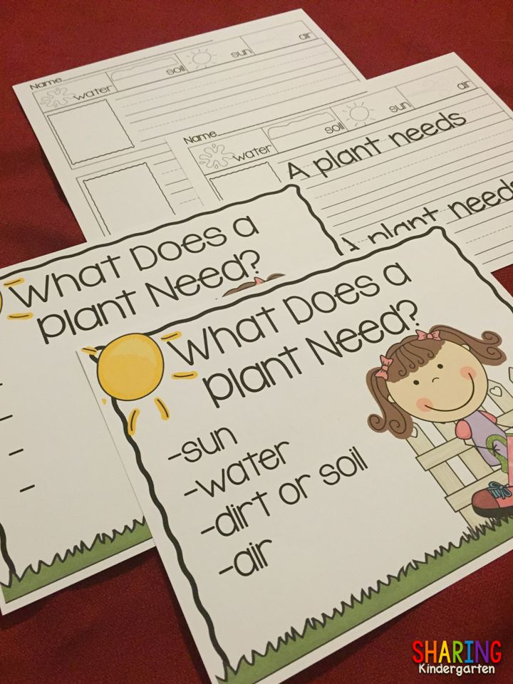 What does a Plant Need?