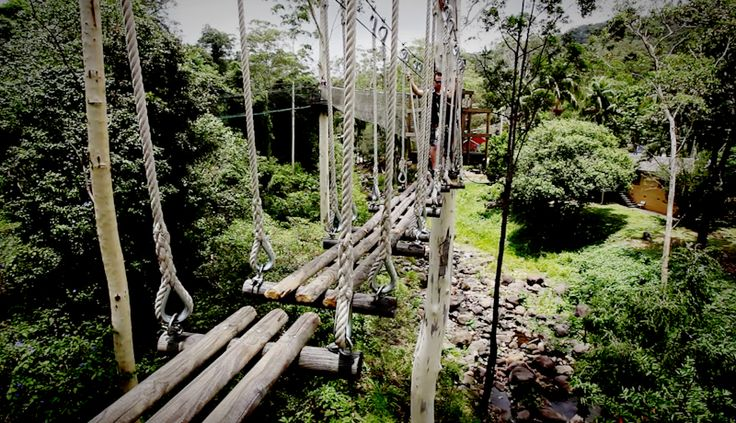 If you haven't even walked through the Tree Tops this is your chance... http://ticketsandtours.com.au/travel/tree-top-challenge/ Book your ticket now