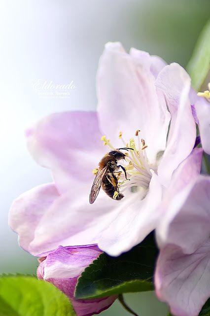 "Dominik ""Eldorado"" Horvath – Google+ Jaro 2014 / Spring 2014 #eldoradothemeart #natural #promotion #flowers #landscape #macro"
