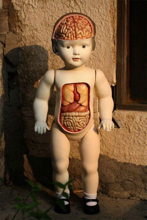 Anatomy Doll Anatomical Art Pinterest Dolls Anatomy And Art