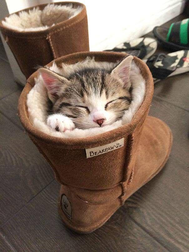 Un Chat qui fait la sieste dans une botte fourrée