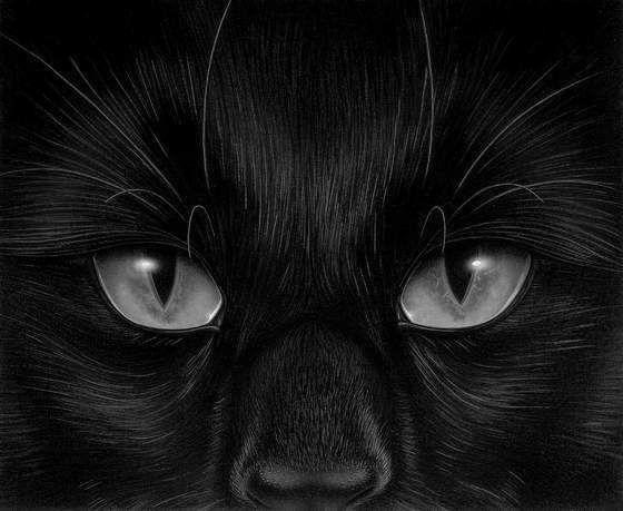 @темы: животные, кошки, черно-белые