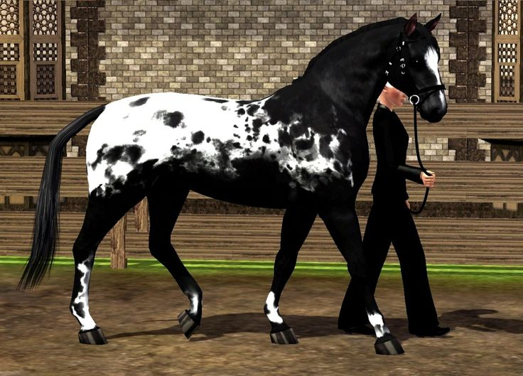 The appaloosa horse is an ancient breed depicted in cave paintings as far back as prehistoric times. Description from templatesku.com. I searched for this on bing.com/images
