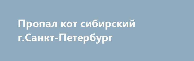 Пропал кот сибирский г.Санкт-Петербург http://poiskzoo.ru/board/read30729.html  POISKZOO.RU/30729 Пропал кот: сибирский метис - есть немного от мейн-куна, .. лет, кастрирован, окрас светло-серый немного в бурый, полосатый, пушистый. Подбородок белый. Глаза светло-оливковые с желтизной. Темная полоса по спине, полосы на бедрах и передних лапах. Светлые загибающиеся щетки из ушей. Нос прямой с еле заметной горбинкой. Хвост очень пушистый, плоский - по типу пера, наружная сторона темная…