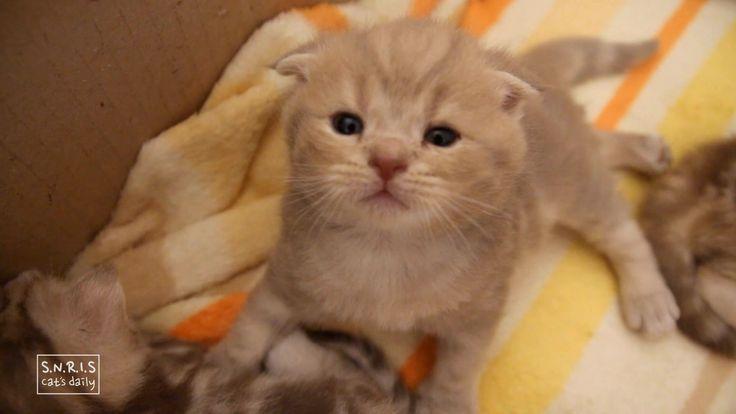 [Cat's daily] 저 좀 봐 주세요