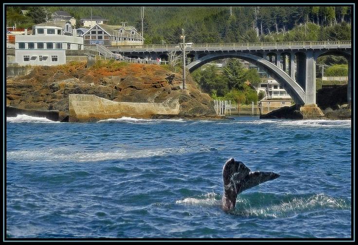 Astoria Oregon Whale Watching Tours