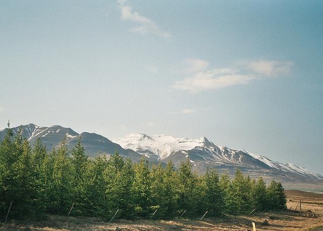 North Iceland - Fuji superia 35mm, Olympus trip 35