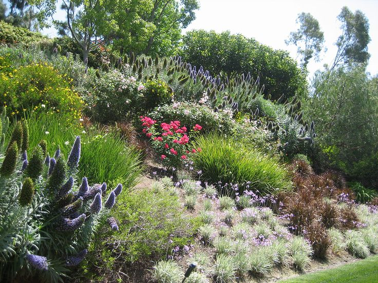 swaths of color on a slope- looks like Pride of Madeira, Roses, Society Garlic, New Zealand flax...pretty.