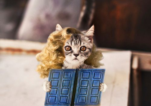 Doctor Who Official on Tumblr - Doctor Who as Cats