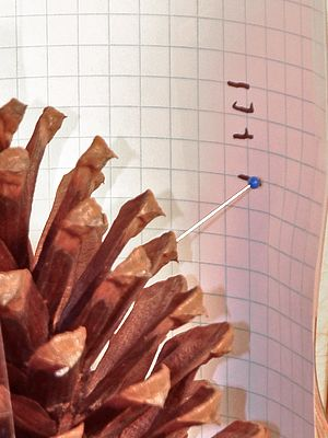 Science Experiment : Pinecone Weather (an explanation of why pine ones open and close in dry/wet weather)