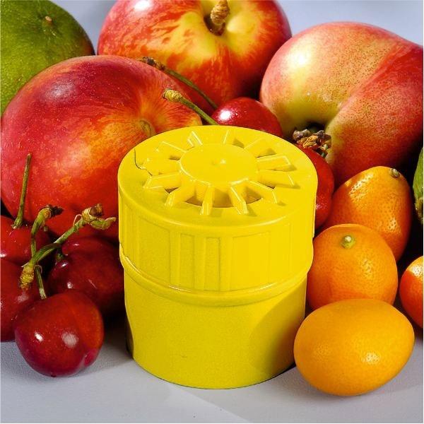 Pièges mouches à fruits : Par 2 - TEMPS'L
