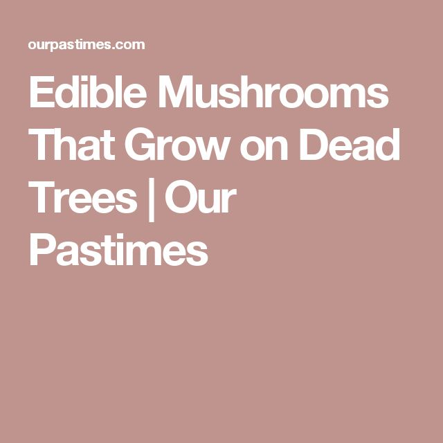 Edible Mushrooms That Grow on Dead Trees | Our Pastimes