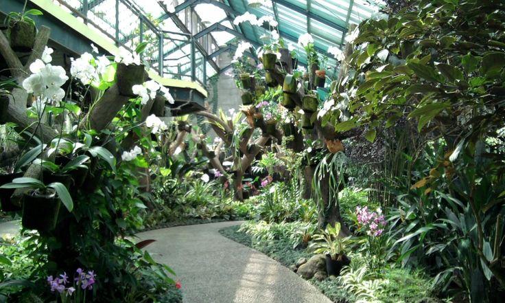Inside the orchid house in Bogor Botanical Garden