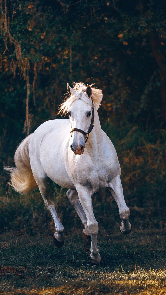 خيل لطيف Horses Beautiful Horses Pretty Horses