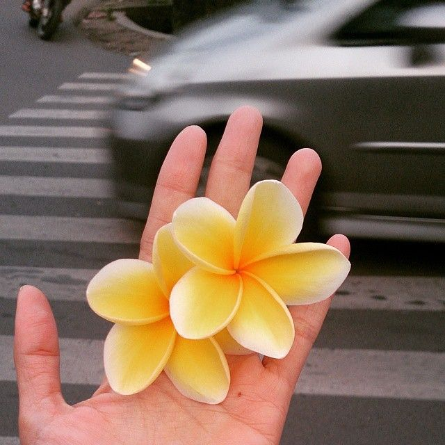 @lovineyou gives us a flower shot for this #pixlr #inhand challenge – practically in the middle of traffic. Make sure you look left, right, and then left again before crossing, Davienne! via Instagram http://ift.tt/1N10A9k