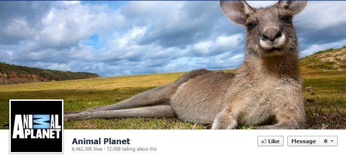 Facebook Animal Planet