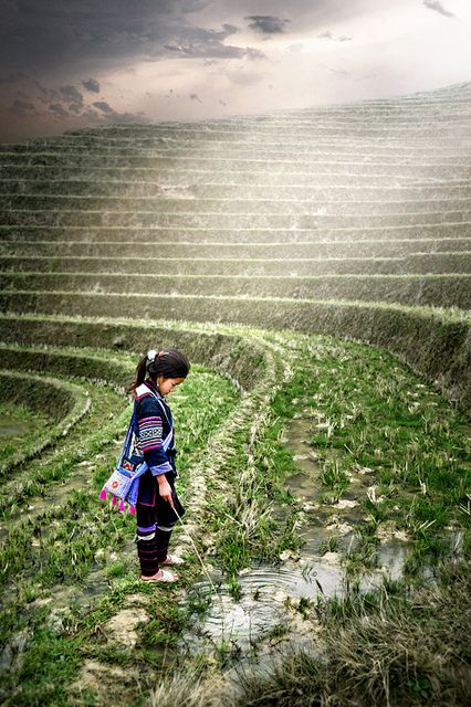 Tiered Rice fields, Sapa, Vietnam by David Lazar  ...  (Reflection, via Flickr).