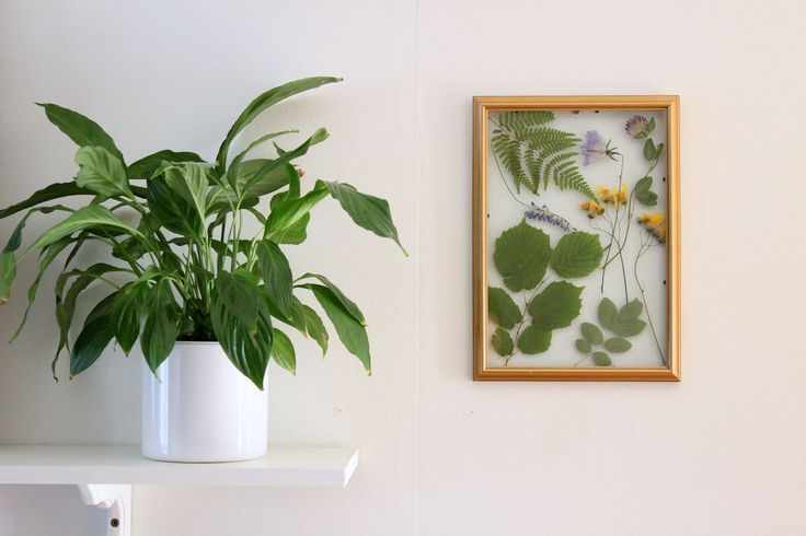 Nature DIY - preserve summer flowers in a frame