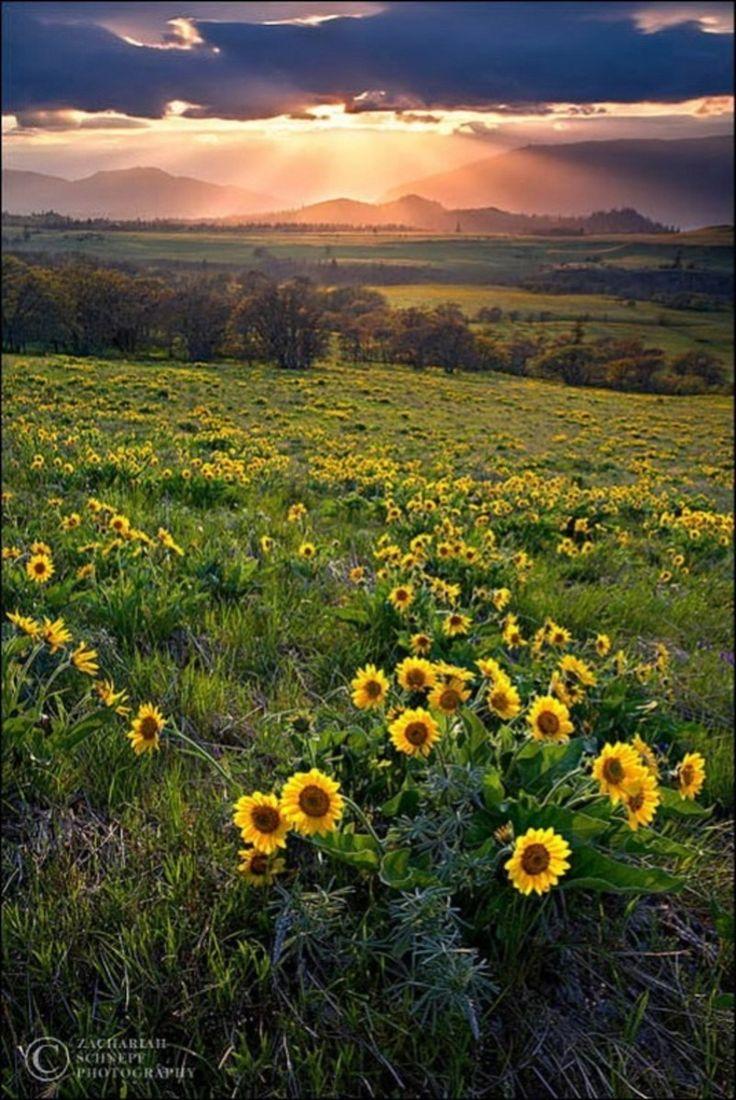 belles images paysages 34 best LOUISIANA images