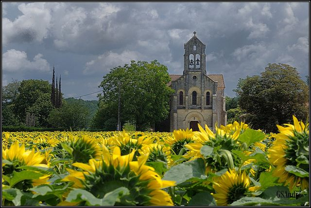 French church in sunflower fields: Sunflowers Flowers, French Church, Sunflowers Church, Sunflowers Building, Building Architecture, Dark Sky, Beautiful Flowers, Sunflowers Fields, Sunny Yellow