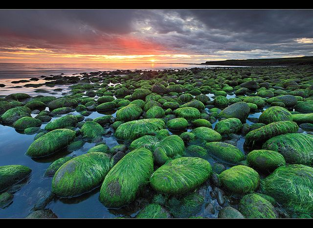 """""""Radioactive Rocks"""" ( not really, read on) - Hafnarfjörður, Iceland  Low tide reveals these very interesting rocks that are covered in green sea wheat. I do not remember seeing these rocks so green before. I am sure I would have noticed them if they where this green. But then again alot of changes are going on in the sea around Iceland these days due to warming climate. By orvaratli"""