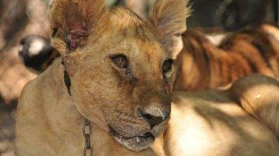 Petizione · Intendente de Luján, Oscar Luciani : Cierre del Zoo de Luján · Change.org