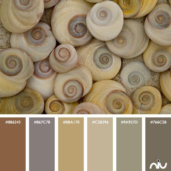 Shells Color Palette