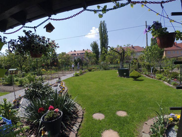 Piękny ogród dzialkowy idealny ! ROD ODRA 1 (Opole)