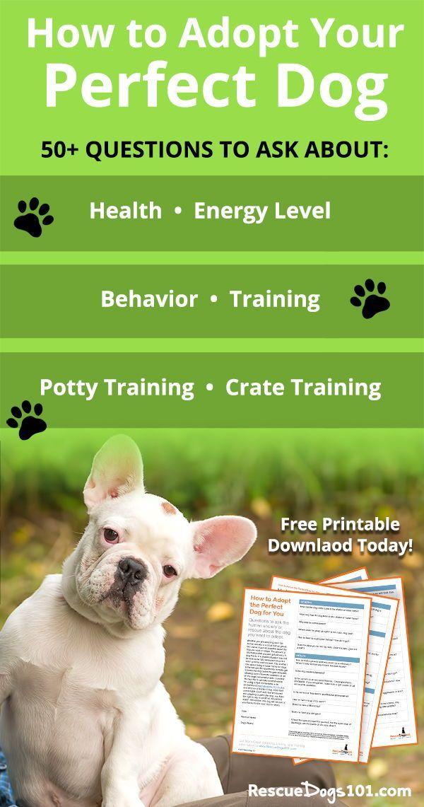 Adopt Your Perfect Dog Dog Training School Agility Training