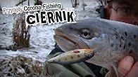 Ciernik - unikalny wobler na pstrągi potokowe. #wędkarstwo #przynęty #filmywędkarskie https://www.youtube.com/user/CoronaFishing/videos