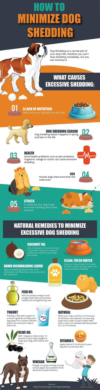 How To Minimize Dog Shedding #Infographic #Animal #Dog
