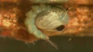 WETLANDS Mosquito life cycle, via YouTube.