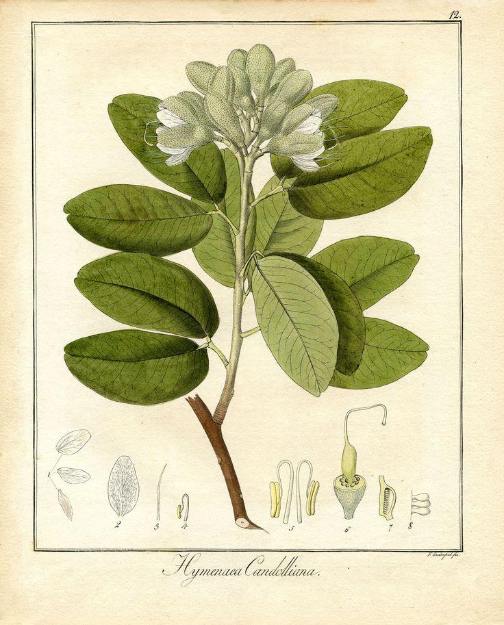 Printable Botanical