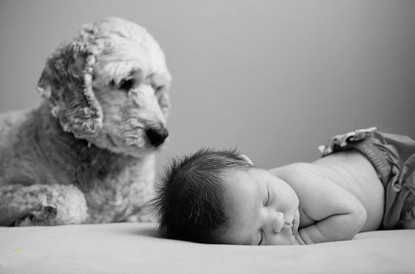 Adorable Baby + Pet Photos