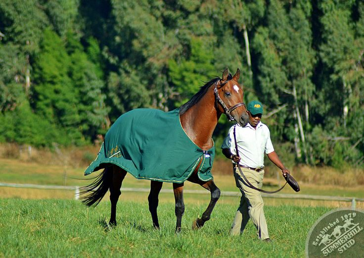 84 Best A P Indy Images On Pinterest Horse Racing Race
