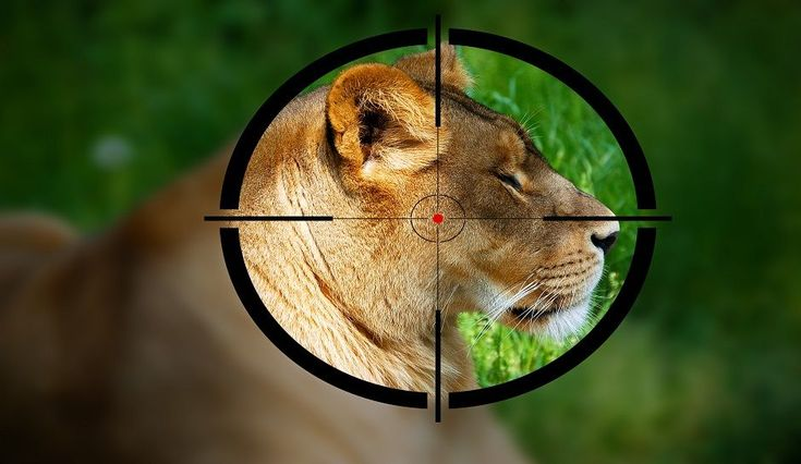 Hunting Is Conservation [Opinion]