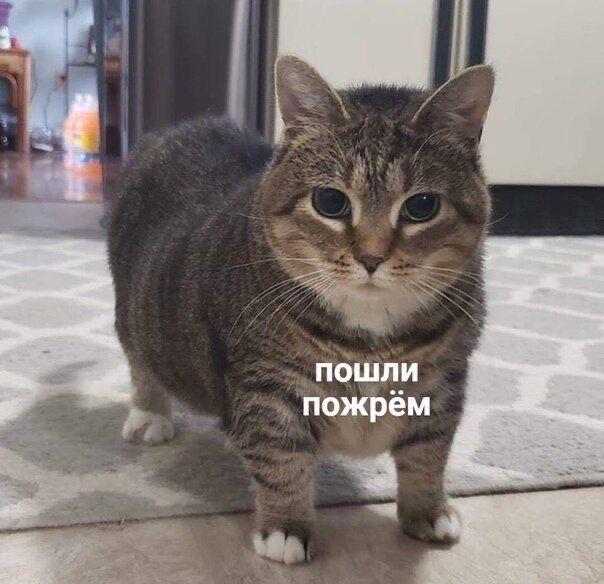 Pin Ot Polzovatelya Qillmii Na Doske Memy Veselye Memy Smeshno