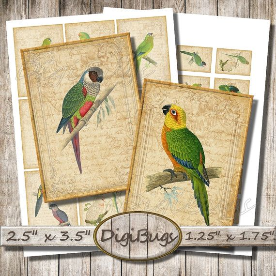 Parrot Illustrations, Digital Collage Sheet, Printable Vintage Images, Parrot Atc Cards, Gift tags, Aceo Cards, Instant Download a8