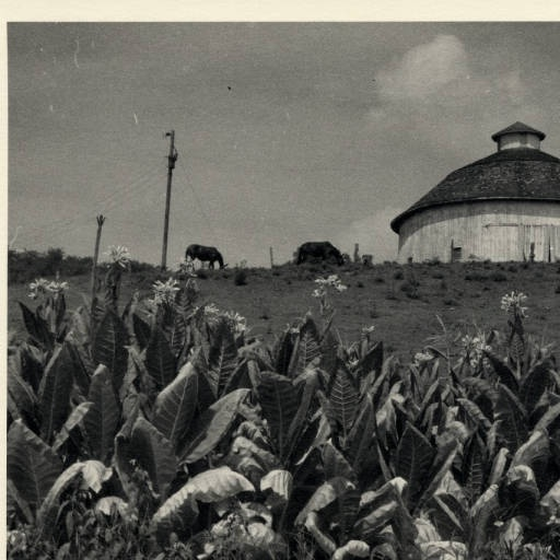 106 Best State And Local History MidPointe Library Images