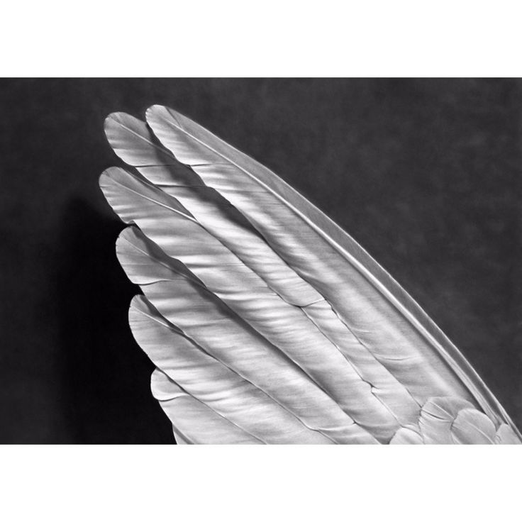 Angel´s Wing - Robert Longo - Weng Contemporary  https://www.wengcontemporary.com/shop/product/angels-wing #robertlongo #angelswing #wengcontemporary #buyonline #print #pigmentprint