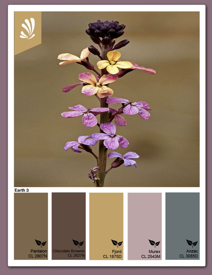 Image result for accent colors that go with gold and brown