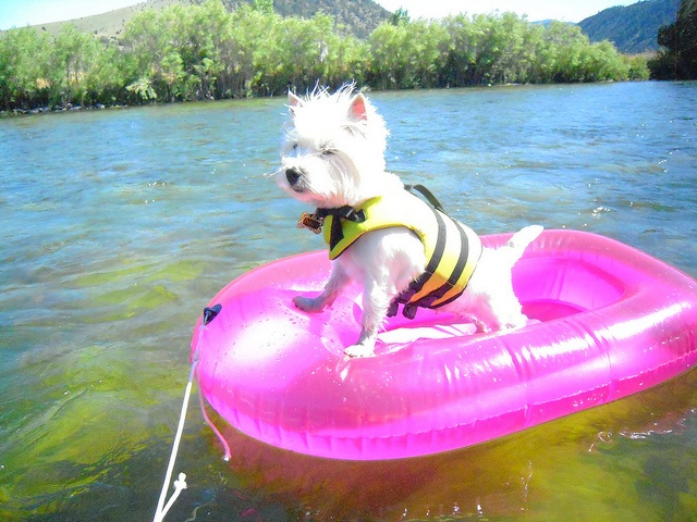 Violet rafts the Madison River! Maize Hutton's Flickr
