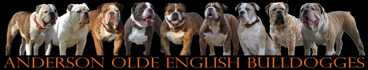 Anderson Bulldogges..this is a must have for the home :-)