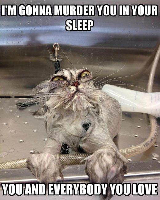 Ça me rappelle mon chat qui avait des puces et qu'on l'avait chaque semaine!!!
