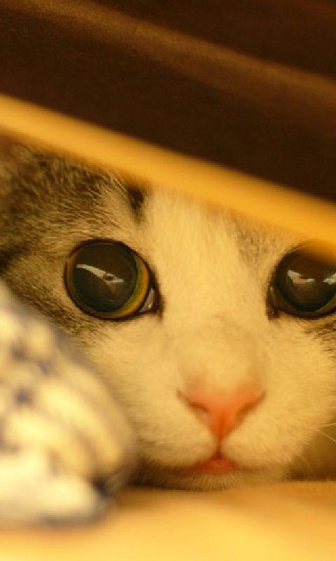 Kittens/Cat Wallpaper                                                                                                                                                                                 Mais