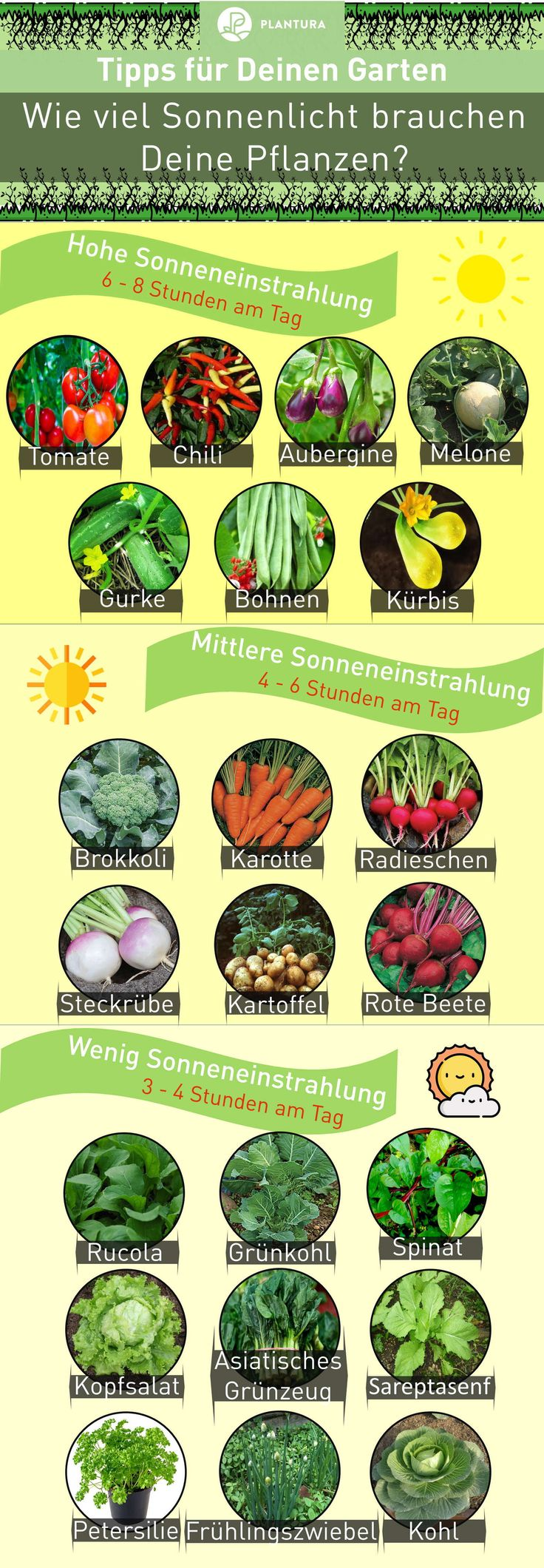 Schattenpflanzen: 16 Pflanzen für den Schatten in Ihrem Garten – Susanne