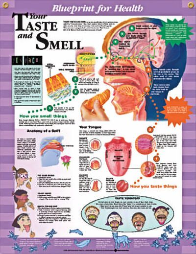 Smell and Taste Disorders: A Primary Care Approach